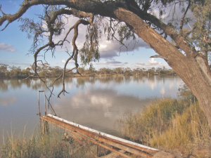 New Residence on the Murray River, downstream from Renmmark: not much left of an 1890s labour cooperative